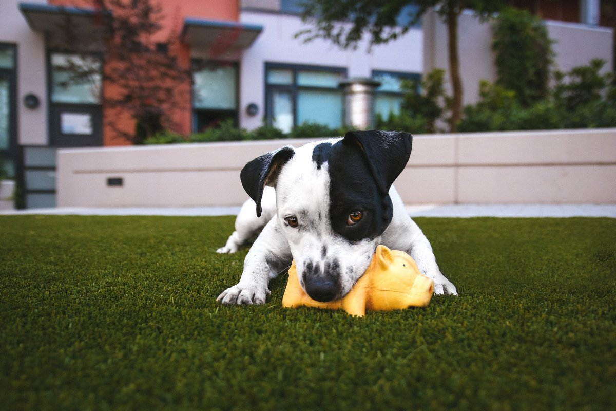 Puppy Toys for Learning